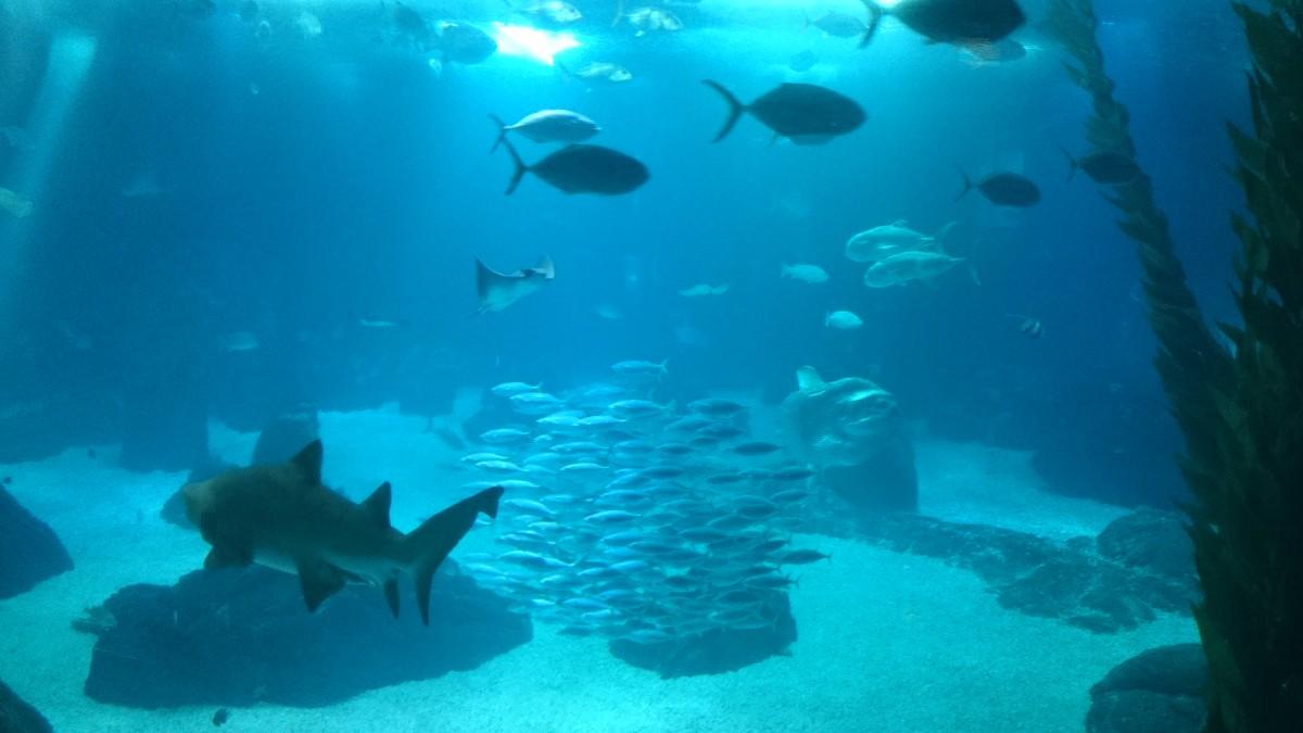 Aquarium im Oceanarium